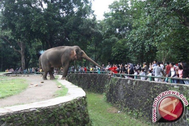 Presiden Jokowi bayar sendiri tiket Kebun Binatang Ragunan