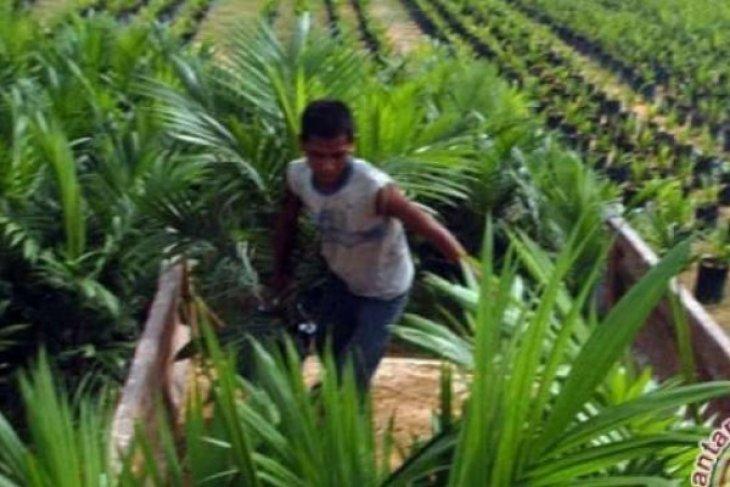 Pemkab Bangka Tengah bantu penyediaan bibit unggul bagi petani