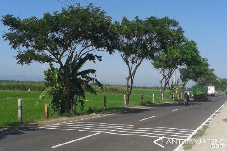 Pohon trembesi paling tinggi menyerap Co2