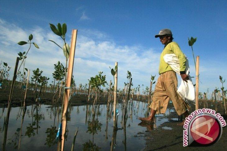 TNI buat wisata mangrove di Mukomuko