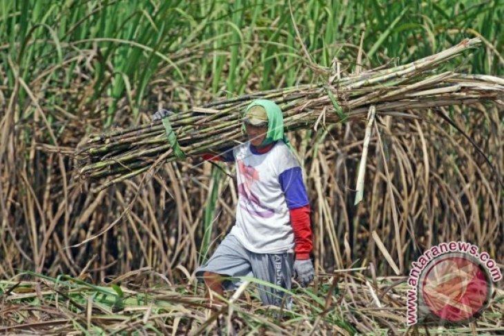 800 massa SPPN 7 akan aksi damai ke PN Blambangan Umpu