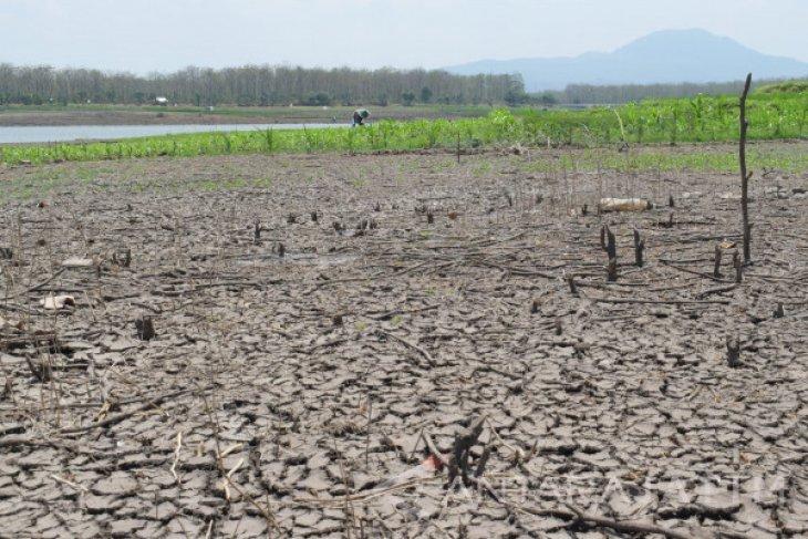 Petani Madiun Manfaatkan  Waduk yang Mengering untuk Bertanam