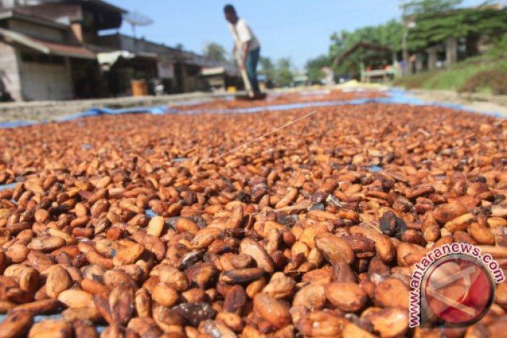 Melihat home industri pengolahan kakao di Aceh
