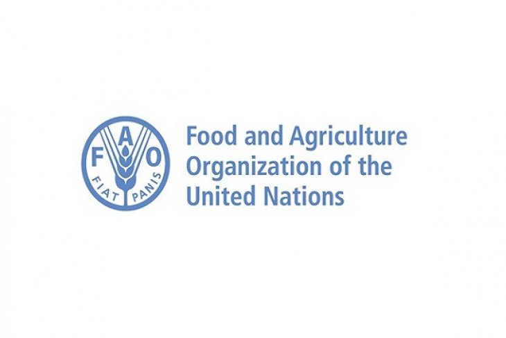 Indonesia, FAO collaborate to overcome diseases in chicken layer farms