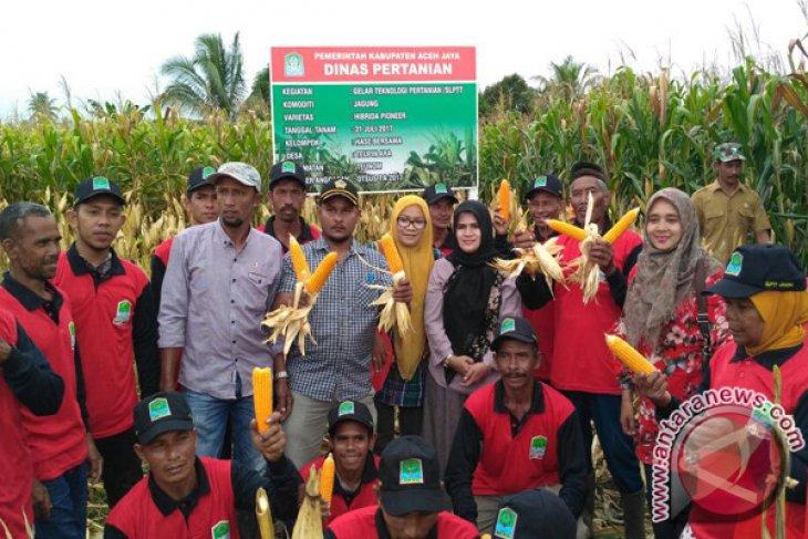 Petani Aceh Jaya panen jagung 50 hektare