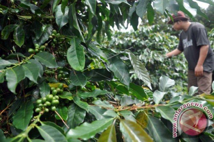 Volume ekspor kopi Sumut turun, harga jual menguat