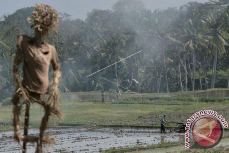 BPS: Nilai tukar petani Bali turun 0,56 persen