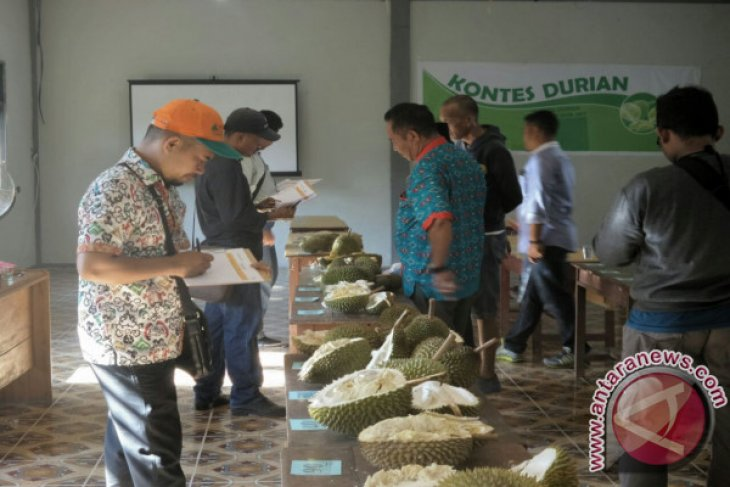 Sedahan Jaya Gelar Festival Durian