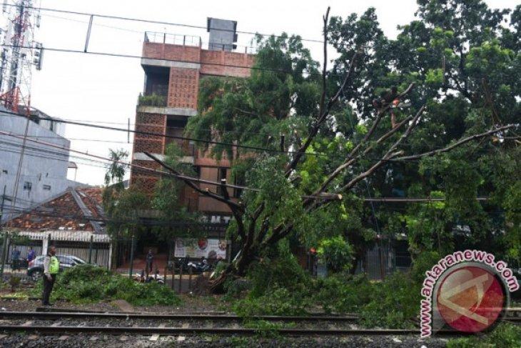 Pohon tumbang  hadang perjalanan kereta listrik