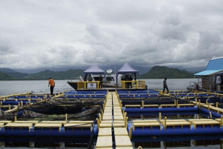 Dinas Perikanan Berupaya Tingkatkan Produksi Ikan Budi Daya