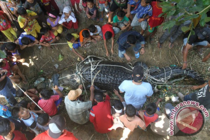 Minister asks people not to shoot crocodile roaming at pier