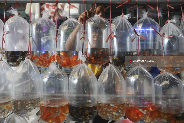 Ornamental fish production target set at 1.8 billion for 2020