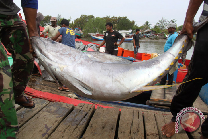 Indonesia can increase exports of fishery products: observer