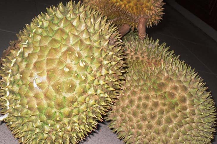 Tabalong's 10 durians obtain variety protection