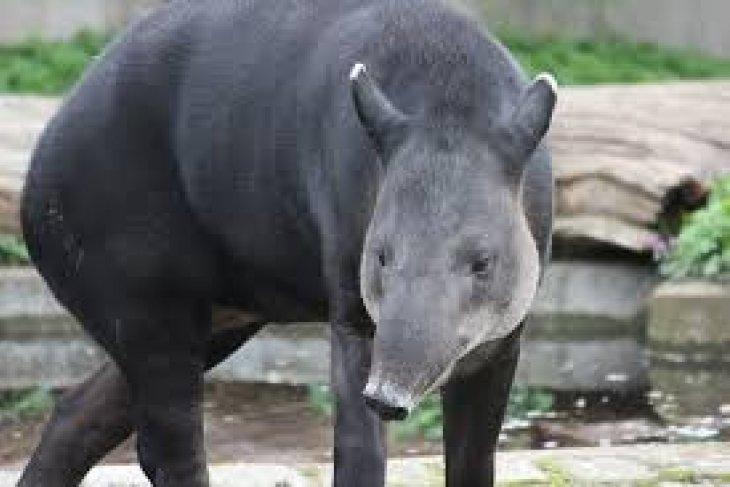 Taman Safari Bogor kembangbiakkan satwa langka