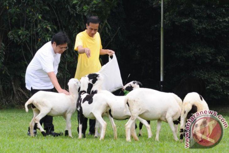 Jokowi, Airlangga enjoy morning exercise at botanical garden