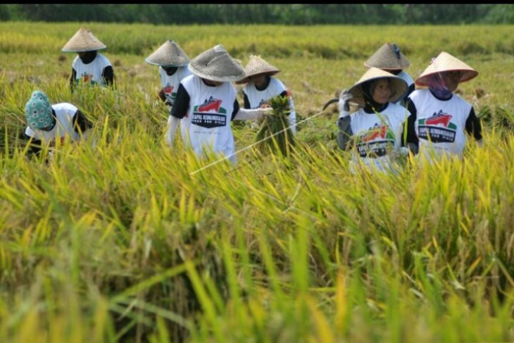 Kubu Raya surplus 23.257 ton beras