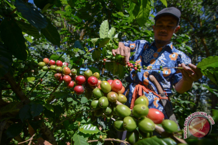 Indonesia eyes increase in coffee export to Canada
