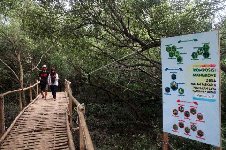 Pemkab Tangerang Kembangkan Objek Wisata Hutan Bakau Antara News Banten