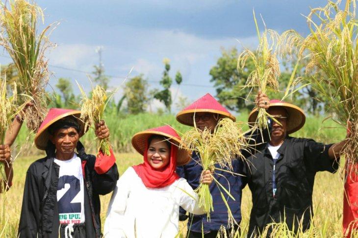 Kunjungi Ponorogo, Puti Panen Padi dan Kunjungi Warga Aisyiyah