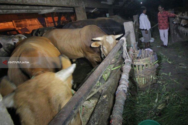 RPH Surabaya Upayakan Daging Murah selama Ramadhan