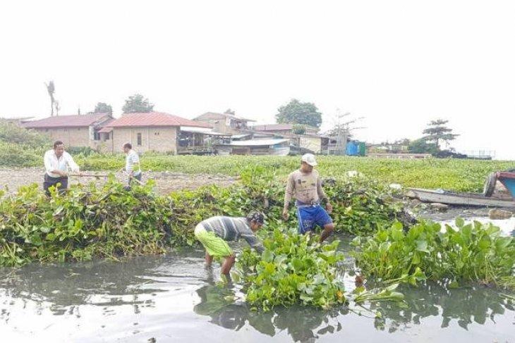 Eceng gondok Danau Toba dibersihkan