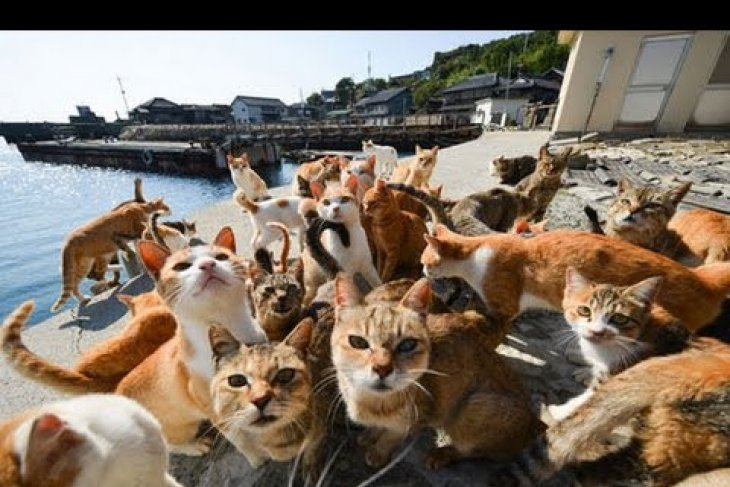 Artikel - Wisata Pulau Kucing di Sula Maluku Utara