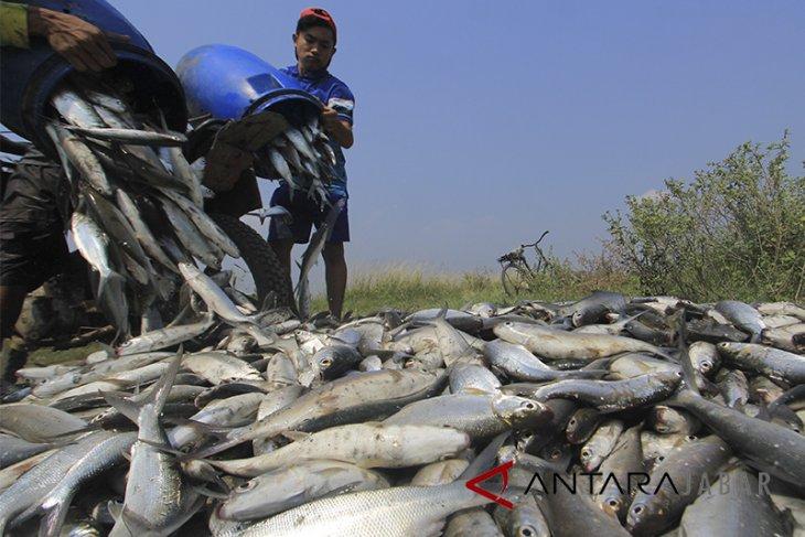 Ekspor Perikanan Budidaya Indonesia