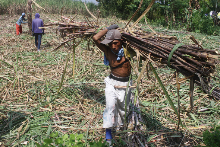 SOE Ministry to accelerate revitalization of sugar mills