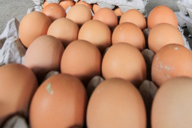 East Java stops sending eggs to South Kalimantan