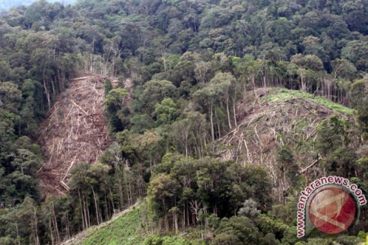 More than 3,000 hectares of forests damaged in Aceh