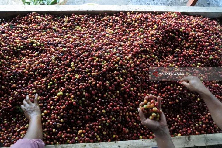 Jatim berupaya tingkatkan ekspor kopi, setahun tembus 75 ribu ton