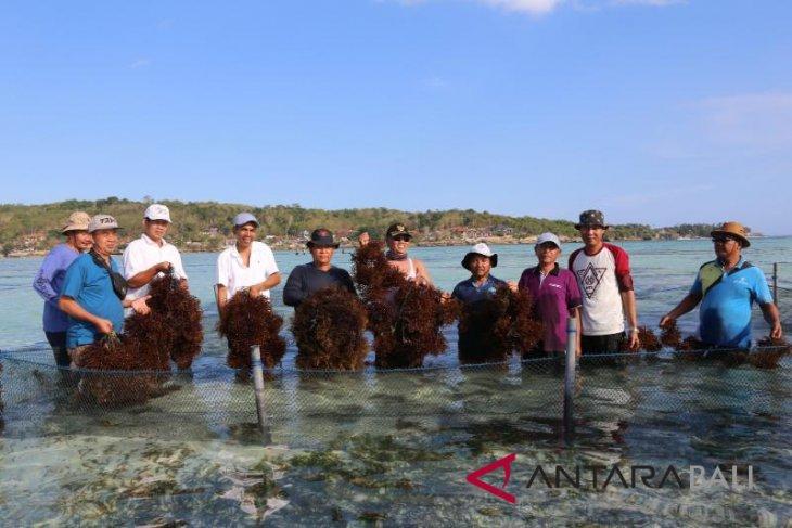 Pemkab Klungkung panen perdana demplot rumput laut