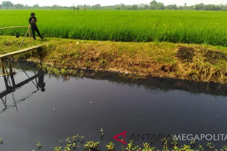 Petani Karawang-Subang gunakan irigasi tercemar limbah