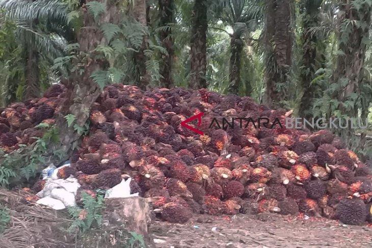 Perusahaan sawit Musi Rawas diminta urus perizinan