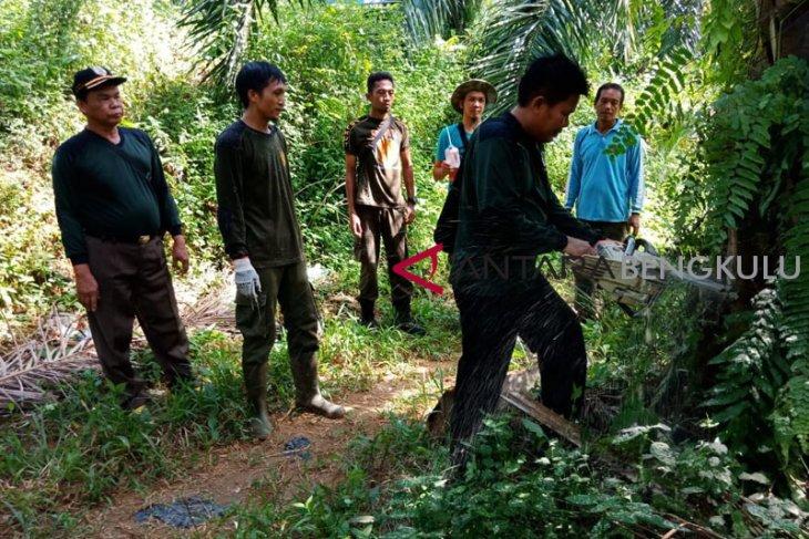 Pemusnahan sawit dalam hutan Mukomuko dilakukan bertahap