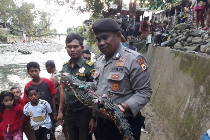 BKSDA Maluku cari buaya di pesisir Ambon