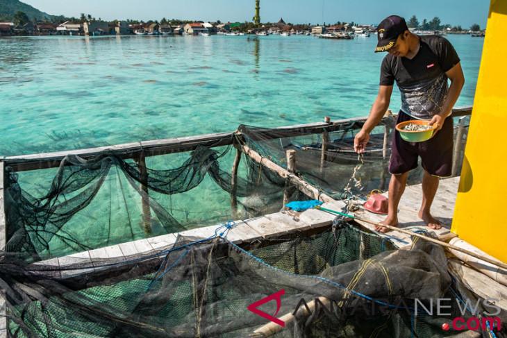 KKP bertekad kurangi penggunaan pakan ikan impor, galakan bahan lokal