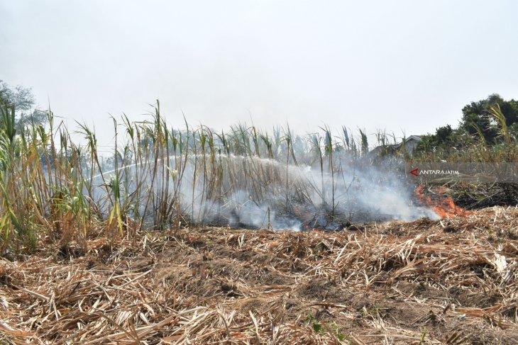 Dandim: Farmland burning will cause nutrient deficiency