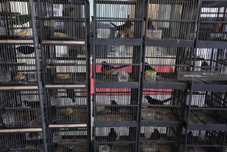 BBKP Surabaya Gagalkan Penyelundupan 154 Ekor Burung