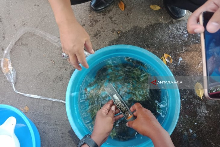 Ribuan Benih Ikan Kerapu Ditebar di Perairan Binor Probolinggo