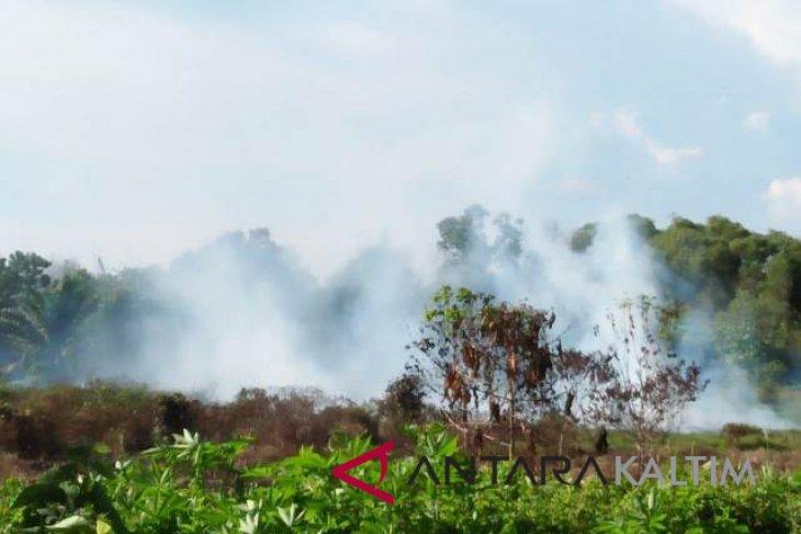 Kebakaran lahan gambut di Penajam makin meningkat