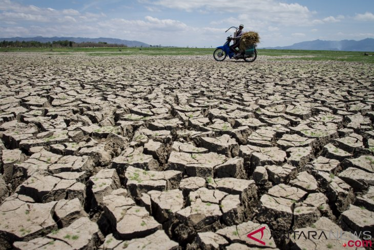 Drought hits 11 districts in East Nusa Tenggara