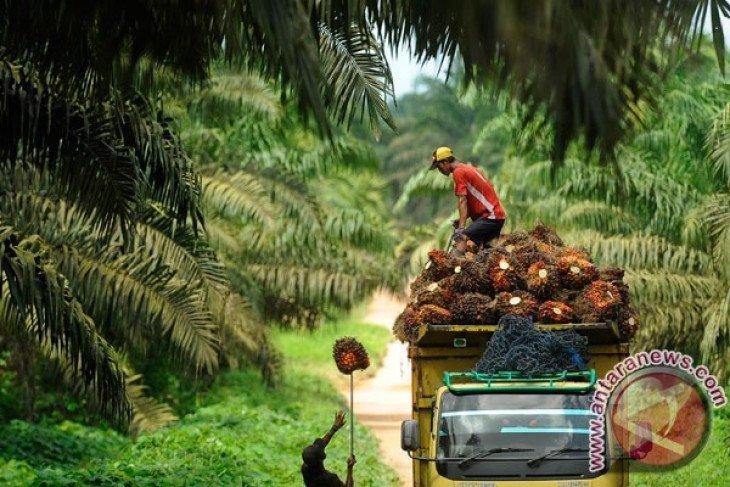 40 pekerja perempuan diberhentikan joleh perusahaan perkebunan sawit