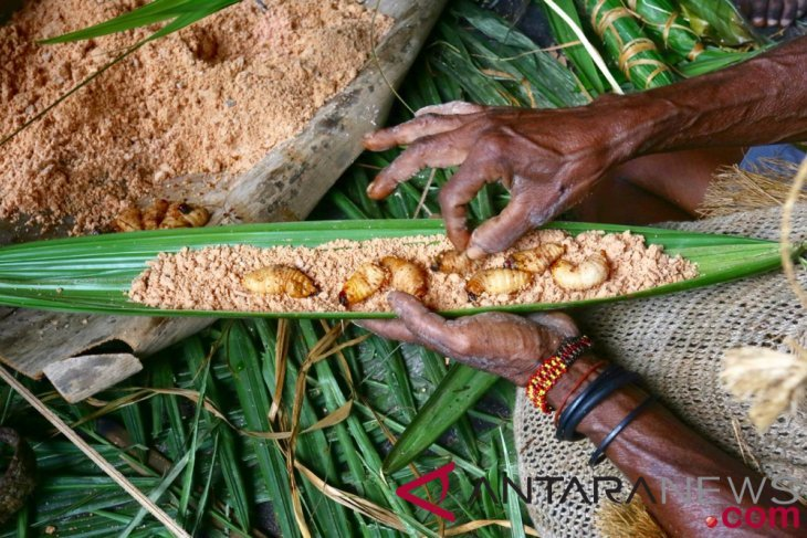 Festival pesta ulat sagu Papua kearifan lokal jaga hutan