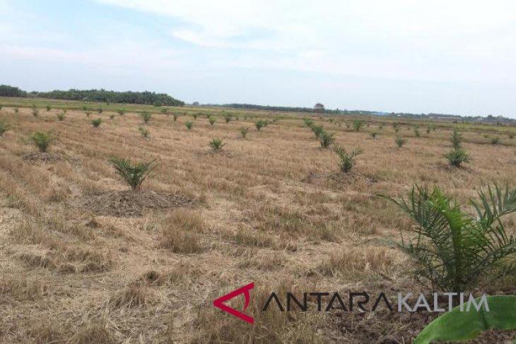 Lahan pertanian Penajam terus menyusut karena irigasi
