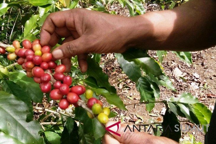 Butuh Roasting tingkatkan produksi kopi