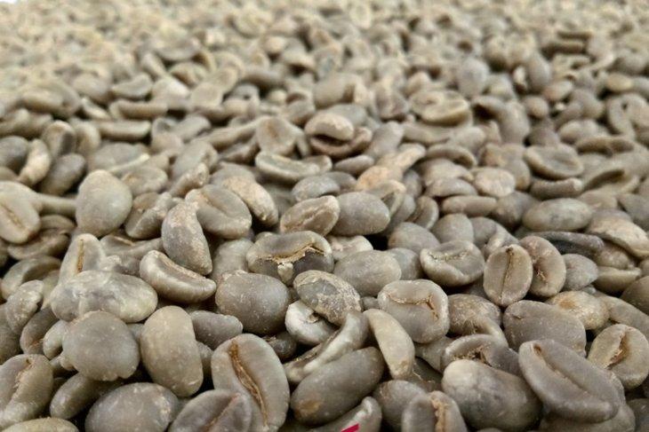Green Bean Tabo kopi Sipirok ke tingkat nasional
