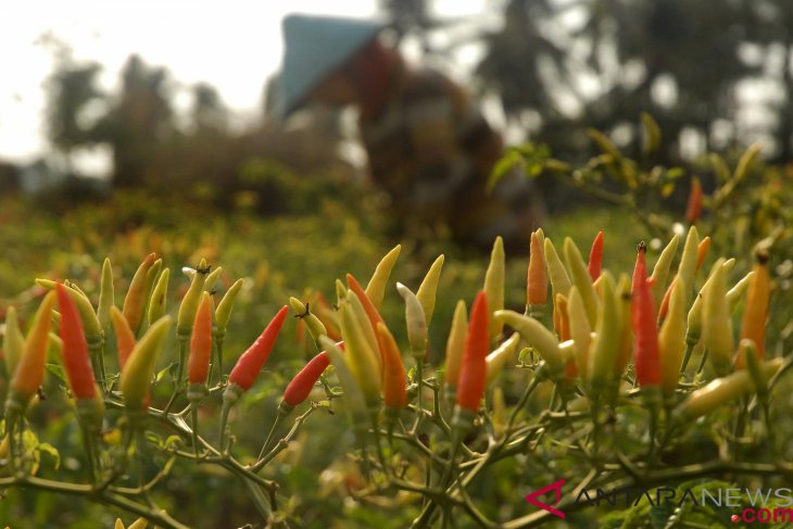 Red chili price hike triggers October 2018 inflation: bps