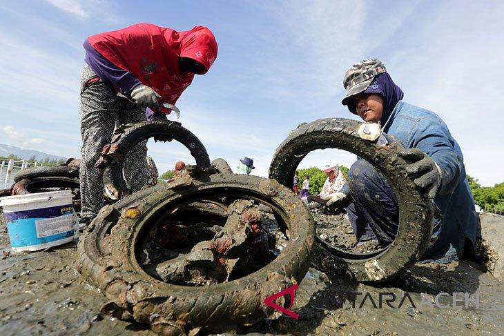 Modernisasi budidaya tiram di Kota Banda Aceh